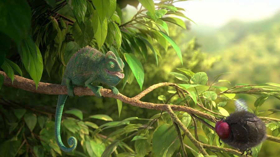 Our Wonderful Nature-The Common Chameleon